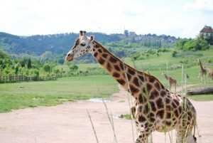 גן החיות בפראג 2021 - מחירים, כרטיסים וטיפים
