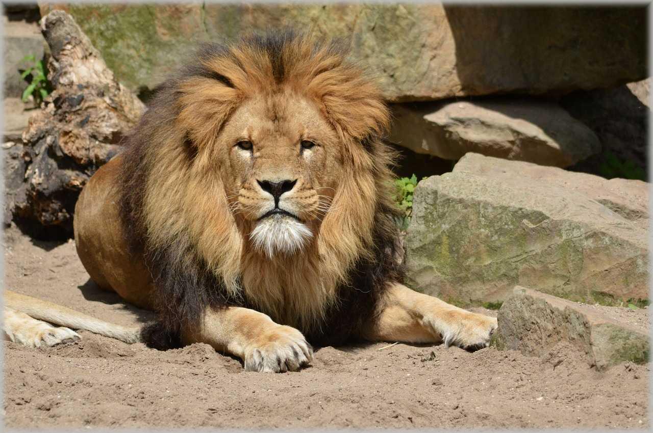 גן החיות ארטיס אמסטרדם 2021 - רכישת כרטיסים ומידע נוסף