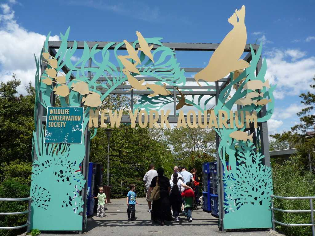האקווריום של ניו יורק 2021 - מחירים, כרטיסים וכל הפרטים