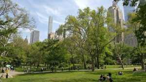 מלונות מומלצים ליד סנטרל פארק ניו יורק - אלו הם 5 הטובים ביותר!