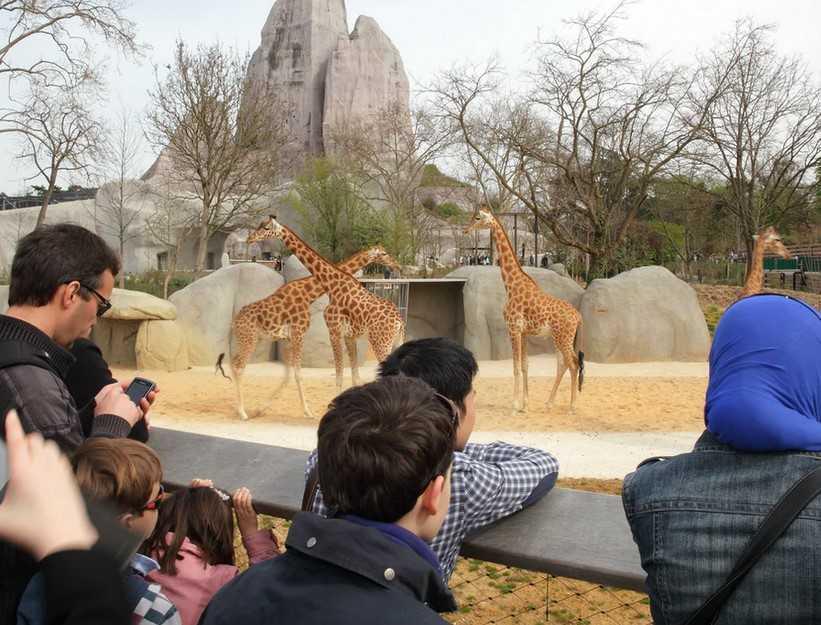 גן החיות בפריז - האם שווה לבקר? וכמה עולים כרטיסים?