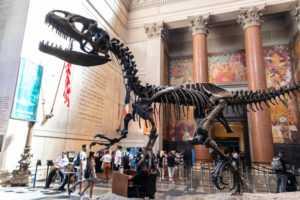 מוזיאון הטבע בניו יורק 2021 - כרטיסים, מחירים, המלצות וכל הפרטים!